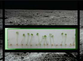 750108main_Lunar_plants